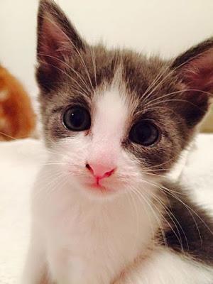 De por qué los gatos entrecierran los ojos cuando nos escuchan leer- Marieta Pancheva