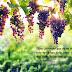 ¿Cómo dar mucho fruto? (Juan 15:2-6)