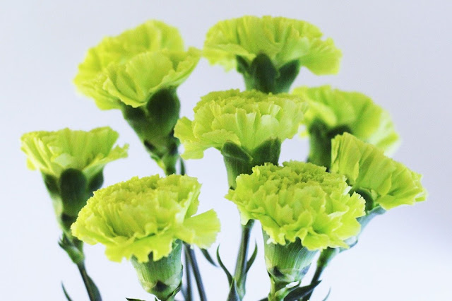 Green carnations | UK lifestyle blog