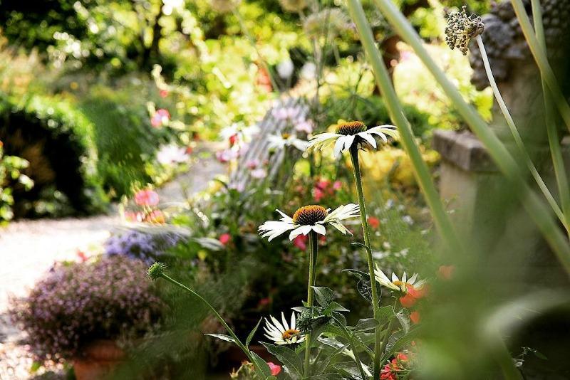 Echinaceas blancas