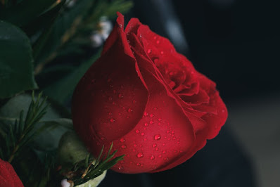 https://unsplash.com/s/photos/red-rose