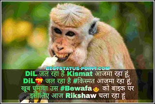 Comedy_Status_Images_in_Hindi