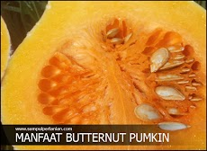 Manfaat Labu madu atau Butternut pumkin (Cucurbita moschata)