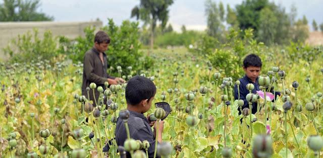 Μόσχα: Αμερικανοί ενέχονται στο εμπόριο ναρκωτικών από το Αφγανιστάν