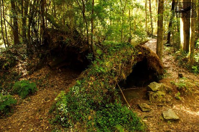 Bosque Encantado Galicia