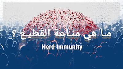 ما هي مناعة القطيع Herd Immunity و هل تنجح في مواجهة وباء كورونا ؟