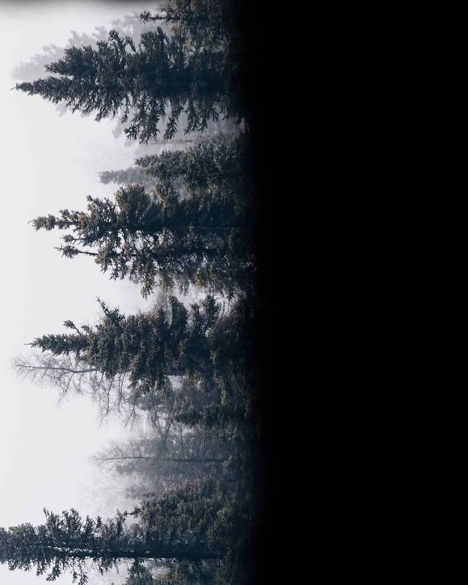 Double Exposure Effect Photo Editing Png Download