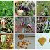 Δωρεάν εκπαίδευση για την βιοποικιλότητα με πρωταγωνιστές τα φυτά στη Θέρμη
