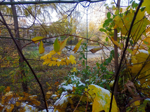 Ul. Wólczańska, połączenie jesieni i zimy.