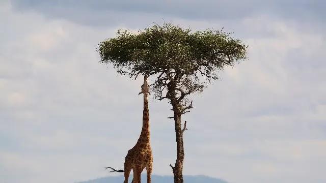 Kenya Travel  4 Best Reasons Why You Go on Safari