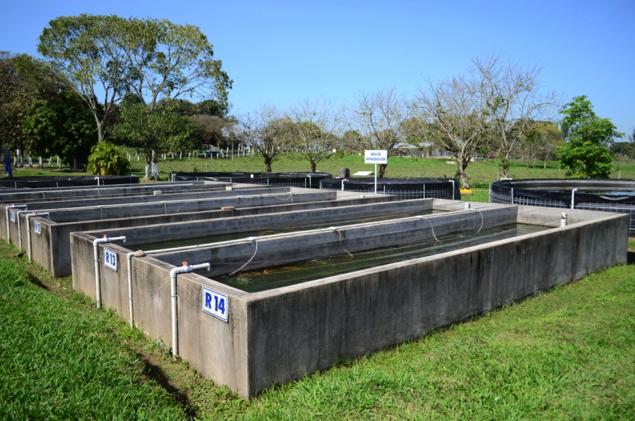 Instalaciones y equipos de estanques para peces estanque for Como hacer una granja de peces
