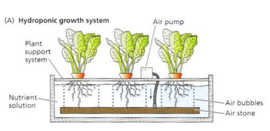 ผลการค้นหารูปภาพสำหรับ การปลูกผักไฮโดรโปนิกส์ มีกี่แบบ