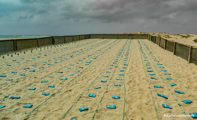 Ninhos de tartarugas marinhas em Kite Beach, Ilha do Sal
