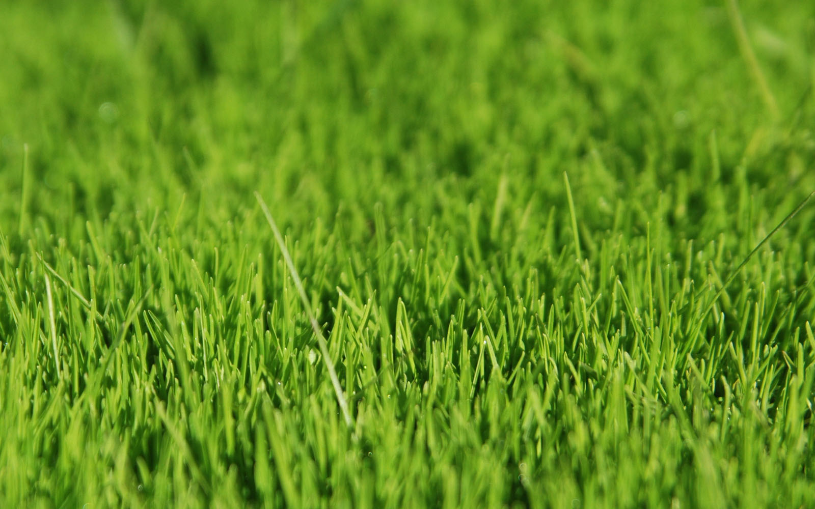 Wallpapers Grass