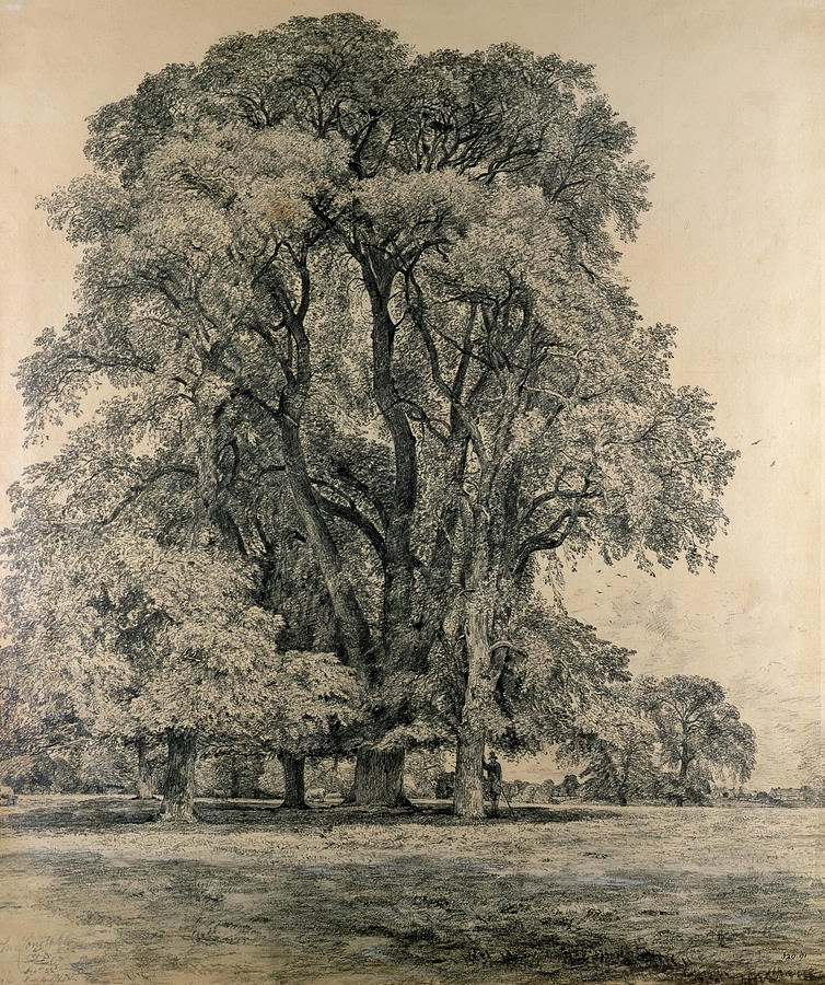 Weekly : Doodles and tuts: Drawspace lesson F10: How to ... |Tree Landscape Drawing