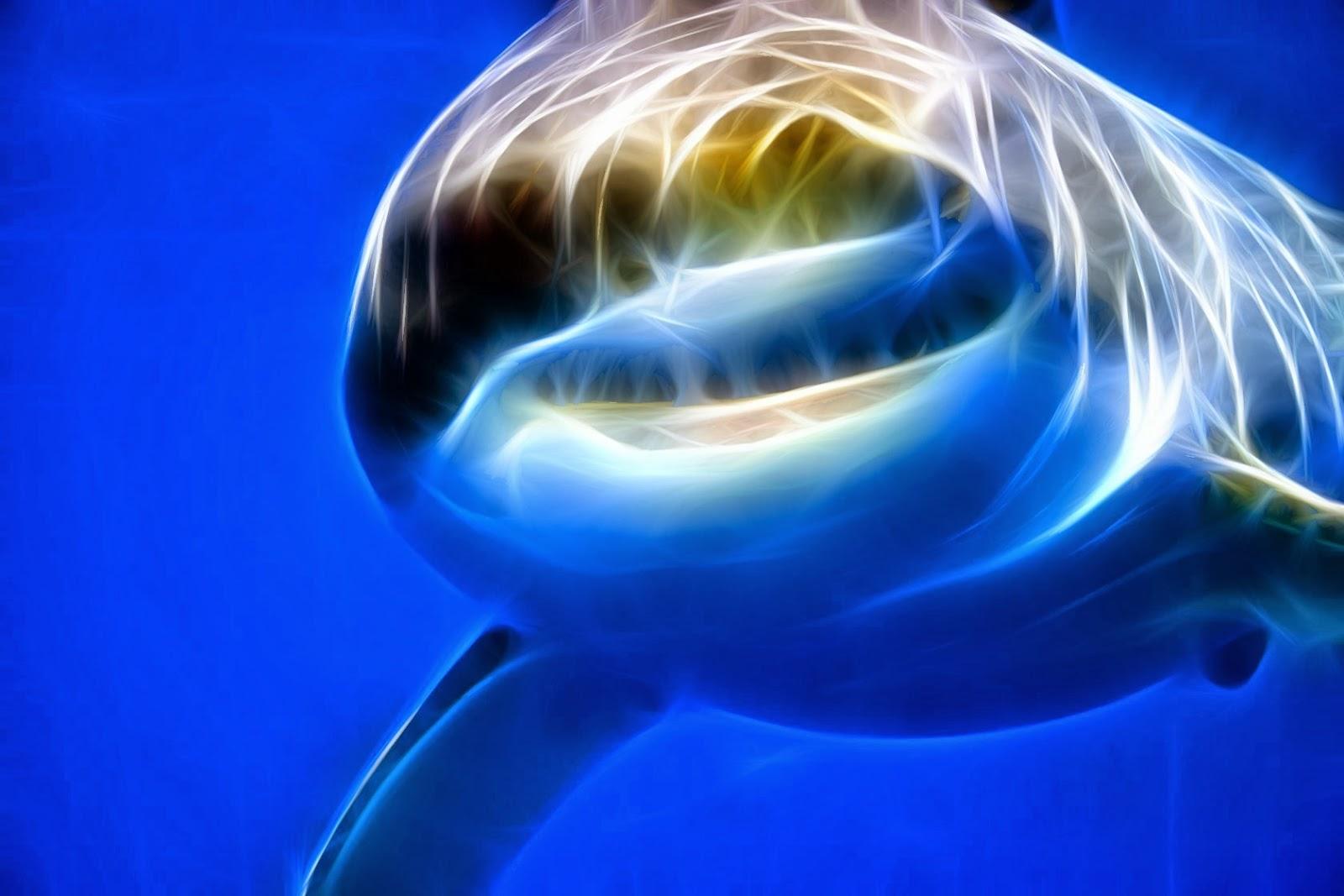 Fondo De Pantalla Animales Tiburon En El Agua Hd Wallpapers Gratis