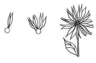 Cara menggambar bunga Aster