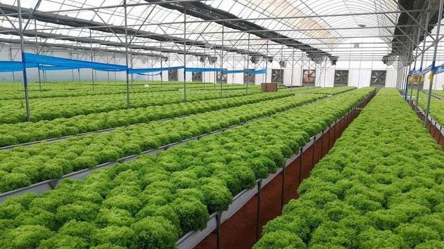 اسعار البيوت المحمية الزراعية في السعودية