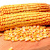 Cultivation Of Maize(Corn) In India And Its Benefits