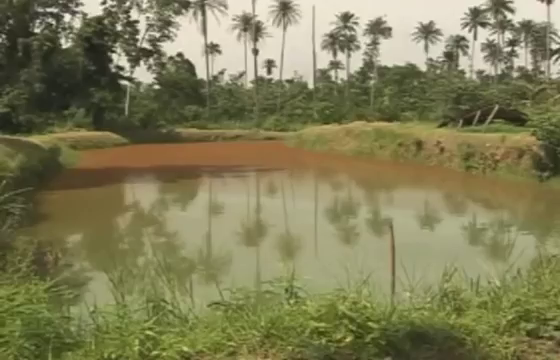 earthen fish pond in Nigeria