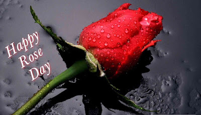 Happy Rose Day 2017 Images, Pictures, Photos