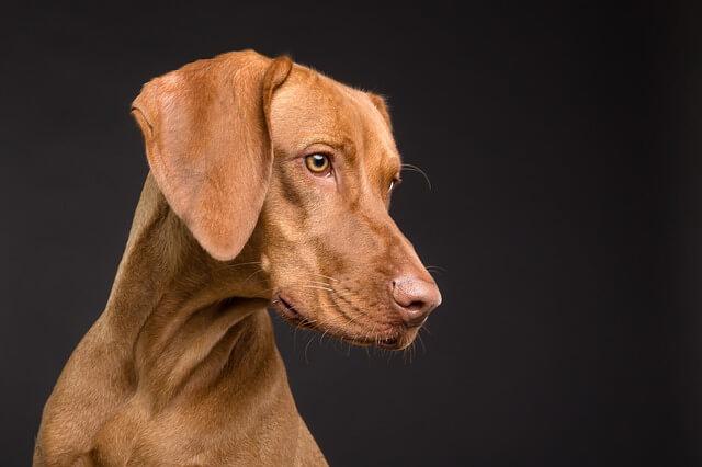 Um cachorro valente e fiel