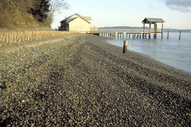 Photo of Luhr Beach after log bulkhead removed and construction of new gravel beach.