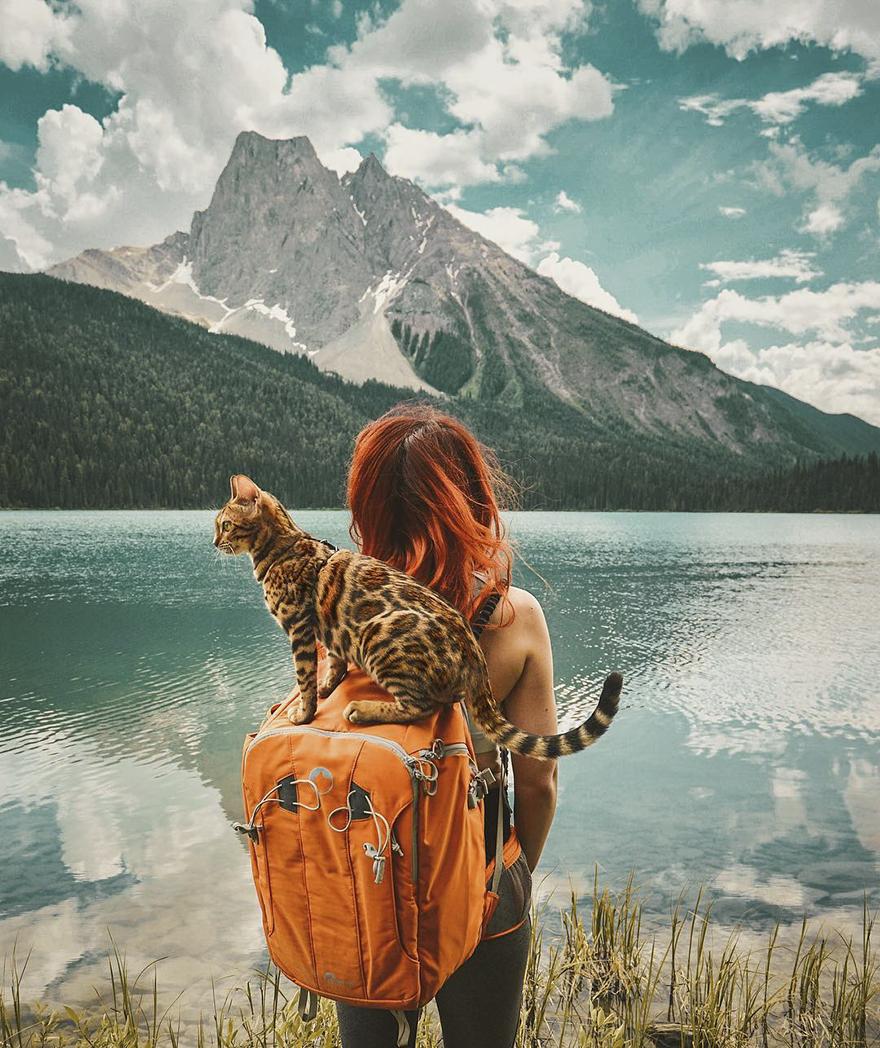 Картинки по запросу кошка путешественница