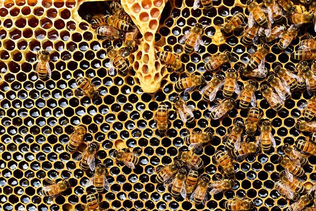 العسل الحر اربعة انواع