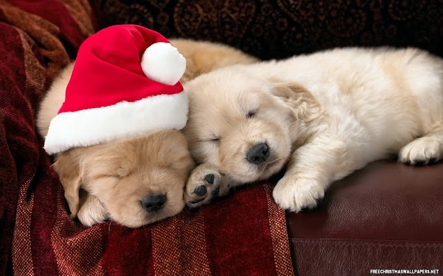 Cute Puppy Christmas Wallpapers