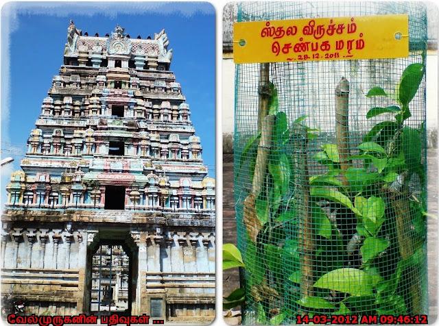 Sivapuram Near Kumbakonam