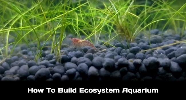 How to build ecosystem aquarium