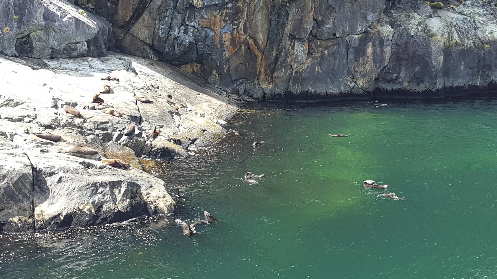 lebende süßwasser steine