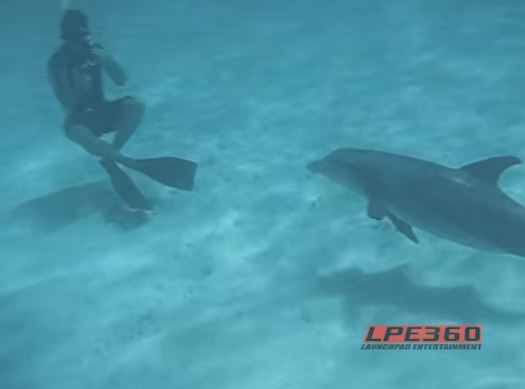 A Dolphin Was Caught On Cam Having A 'BONER' After He Did THIS To A Female Snorkeler!