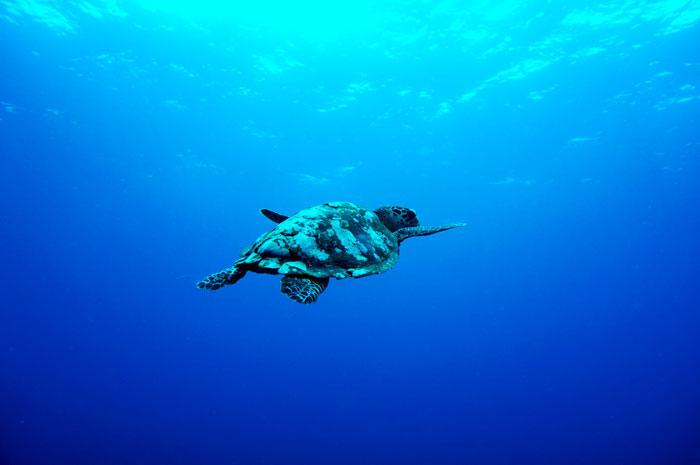 Snorkeling Diving di Gili Islands