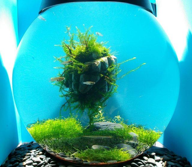 Bể thủy sinh phong cách Avatar - bể thủy sinh tròn
