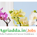 Young Professional-II - Horticulture / Plant Breeding Recruitment