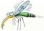 sivri sinek ısırığı
