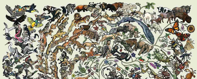 Evolución y biologia