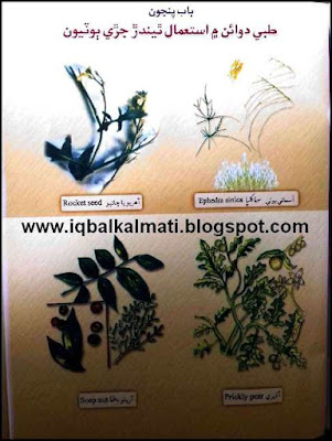 Plants Names with Picture Used in Tib or Hikmat Medicine