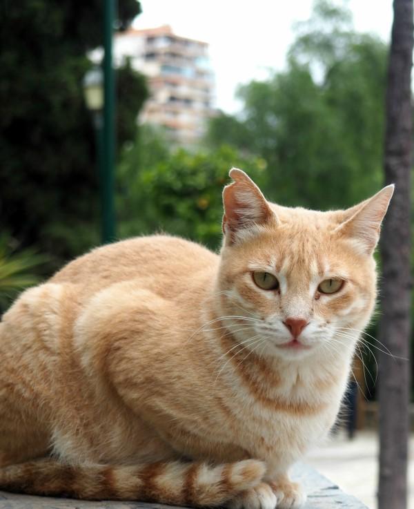 malaga gatos adopcion