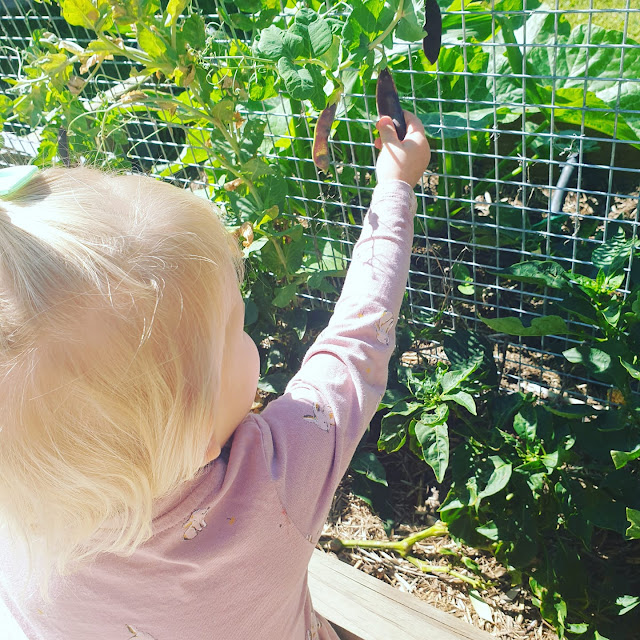 Child picking peas