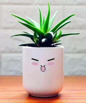 Haworthia Fasciata Succulent Plant in White Ceramic Pot | Best Succulent Plants Online in India | Best Desk Plants for Office