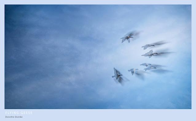 fliegende Gänse, art, photoart, Kunst, Fotokunst, photoart, Dorothe Domke, Sauerland, intentional camera movement, double exposure, abstract