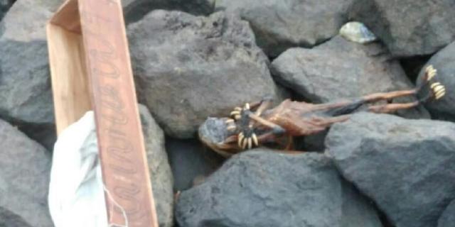 Ada Jenglot di Pantai Watu-Watu, Gemparkan Warga Surabaya