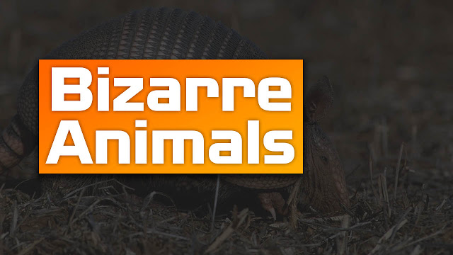 10 Most Bizarre Animals in the Planet