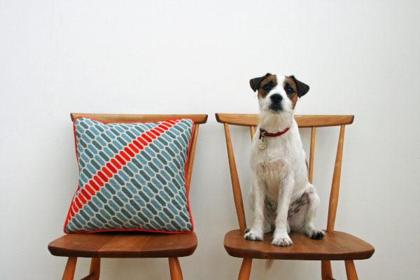Geometric Needlepoint Pillow and Paddy the Jack Russell sat on wooden chairs