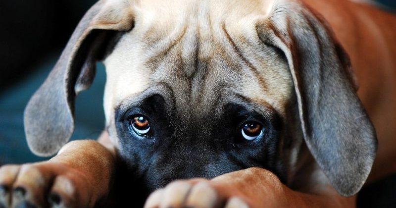 Τελικά μπορεί ο σκύλος μας να πεθάνει απ' τη θλίψη;