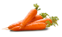 Share your Carrot in anus authoritative answer
