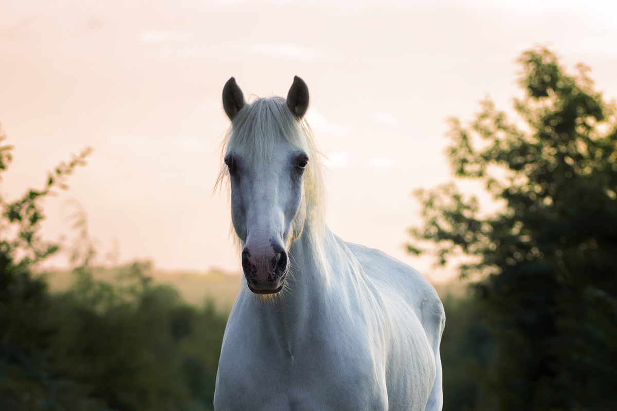 Comment retoucher une photo de cheval